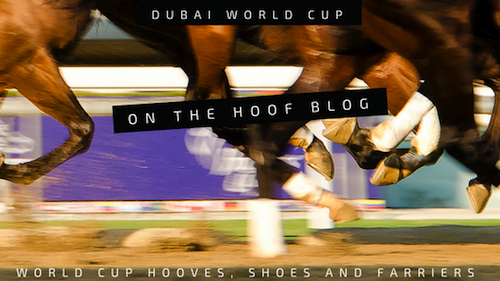 horseshoes at the Dubai World Cup Thorougbred races