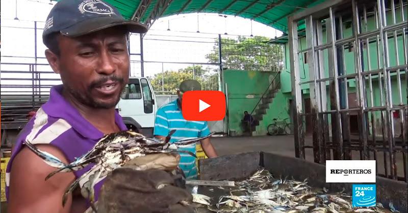 Video revela la catástrofe ecológica en el Lago de Maracaibo - Responsabilidad de Maduro
