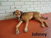 http://www.gruposolar.org.br/2014/12/johnny-esta-em-busca-de-um-lar.html