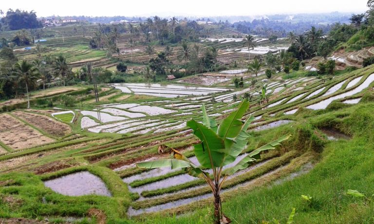 Subak Jatiluwih Rice Fields Terraces (UNESCO) Bali World Heritage Site Travel Rates (Leisure Expenses) - Mengwi, Taman Ayun, Royal Temple, Wanasari, Village, Bali Butterfly Park, Jatiluwih, Rice-Terraces, World Heritage, Unesco, Tanah Lot Temple, Shrines, Sunset, Bali, Attractions