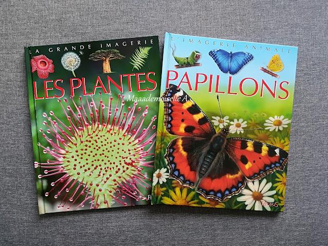 > Les papillons  > Les plantes