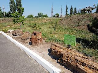 Региональный ландшафтный парк «Клебан-Бык». Экспозиция араукарий