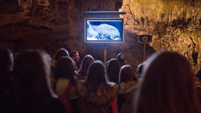 En la Cueva de Postoina, Eslovenia, nació ante la atenta mirada de científicos un dragón bebé de un total de veinte que se esperan.