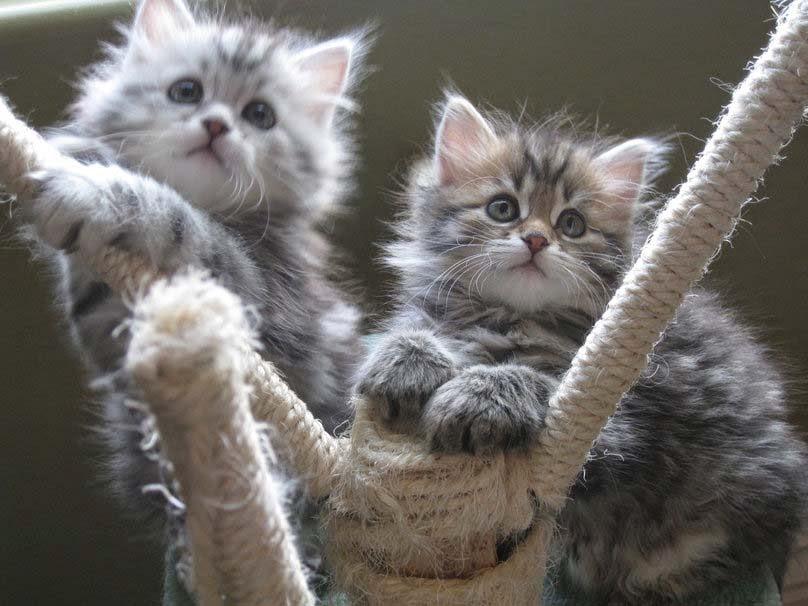 Funny Cute Babies Hd Wallpapers Cat Allfreshwallpaper