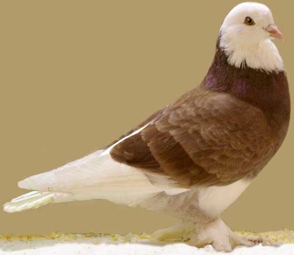 phía tây của chim bồ câu tumbler nước Anh, phía tây của chim bồ câu tumbler nước Anh, về phía tây của chim bồ câu tumbler nước Anh, phía tây của giống chim bồ câu tumbler nước Anh, phía tây của giống chim bồ câu tumbler nước Anh, phía tây của giống bồ câu tumbler thông tin, phía tây của sự kiện giống chim bồ câu tumbler của nước anh, phía tây về hành vi của chim bồ câu tumbler nước anh, về phía tây của hoạt động chăm sóc chim bồ câu tumbler của nước Anh, chăm sóc về phía tây của chim bồ câu tumbler của nước Anh, màu sắc của chim bồ câu ở phía tây của nước anh, phía tây của đặc điểm của chim bồ câu tumbler của nước anh, phía tây của trứng chim bồ câu tumbler của nước anh, phía tây của sự kiện về bồ câu tumbler của nước anh, phía tây của chim bồ câu tumbler nước Anh để bay, phía tây của chim bồ câu tumbler nước anh cho buổi trình diễn, phía tây của lịch sử chim bồ câu tumbler nước Anh, phía tây của thông tin chim bồ câu tumbler nước anh, phía tây của hình ảnh chim bồ câu tumbler nước anh, tuổi thọ của chim bồ câu tumbler phía tây, nguồn gốc của chim bồ câu tumbler phía tây nước anh,phía tây của ảnh chim bồ câu tumbler nước Anh, phía tây của ảnh chim bồ câu tumbler nước Anh, phía tây của chim bồ câu tumbler nước Anh làm vật nuôi, phía tây của sự hiếm hoi của chim bồ câu tumbler nước Anh, nuôi ở phía tây của chim bồ câu tumbler nước Anh, phía tây của nuôi chim bồ câu tumbler, phía tây của kích thước chim bồ câu tumbler của nước anh, phía tây của tính khí bồ câu tumbler nước Anh, phía tây của chim bồ câu tumbler nước Anh thuần hóa, phía tây của việc sử dụng chim bồ câu tumbler nước Anh, phía tây của các giống bồ câu tumbler của nước Anh, phía tây của trọng lượng chim bồ câu tumbler của nước anhphía tây của giống chim bồ câu tumbler nước Anh, phía tây của giống chim bồ câu tumbler nước anhphía tây của giống chim bồ câu tumbler nước Anh, phía tây của giống chim bồ câu tumbler nước anh