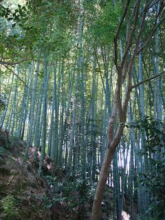 la tranquillità del boschetto