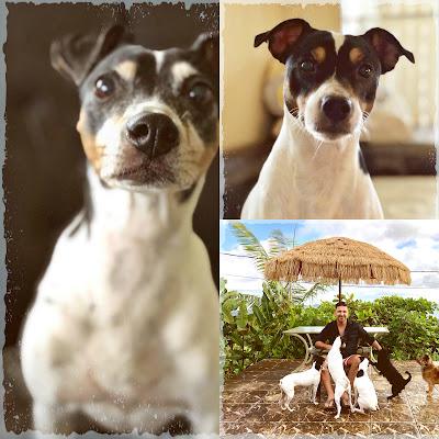 bodegueros perros Lola Papoleon