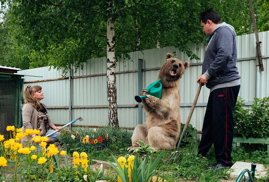 Russian Couple Adopted An Orphaned Bear 23 Years Ago, And They Still Live Together - And did we mention that gardening is his ultimate passion?