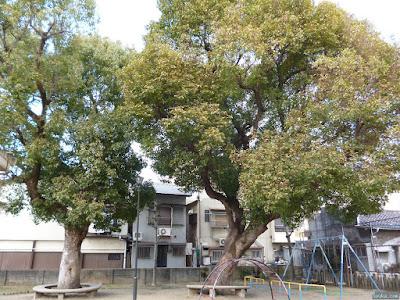 柴島神社公園の木