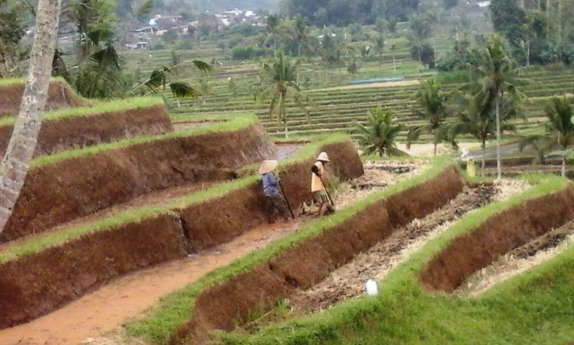 Jatiluwih World Heritage Site Ricefield-Terraces Tourist Attraction - Tourist, Objects, Attractions, Places, Areas, Destinations, Spots, Regions, Jatiluwih, Penebel, Village, Tabanan, Ricefield, Terraces, Bali, Attractions
