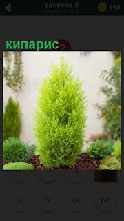 275 слов среди растений растет прекрасный кипарис 9 уровень