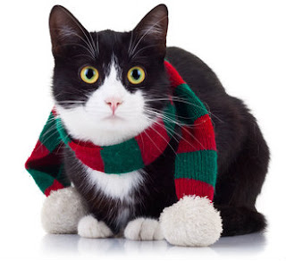 Cats cope with cold weather in many ways. One of them is not wearing a muffler!