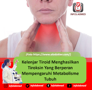 Kelenjar Tiroid Menghasilkan Tiroksin Yang Berperan Mempengaruhi Metabolisme Tubuh