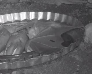 bats eating bananas