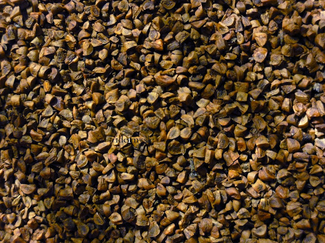 wiesiołek dwuletni, nasiona wiesiołka, zbiór nasion, dzikie rośliny jadalne, rosliny łąkowe, oenothera biennis, evening primrose seeds