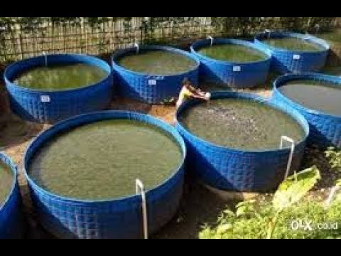 BIOFLOC FISH FARMING TRAINING AUR SETUP