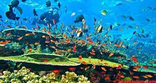 pesona bawah laut pulau komodo