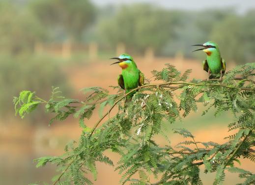 LA RÉSERVE DE FAUNE DE NDIAEL : Parc, animaux, visite, tourisme, sauvage, oiseaux, LEUKSENEGAL, Dakar, Sénégal, Afrique