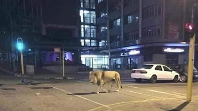 Presiden Rusia Lepas Singa