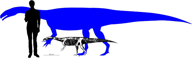 Baby dinosaurs were 'little adults'