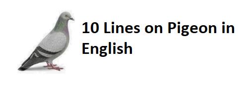 10 Lines on Pigeon