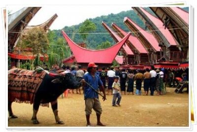 Rental Mobil Tour ke Tanah Toraja