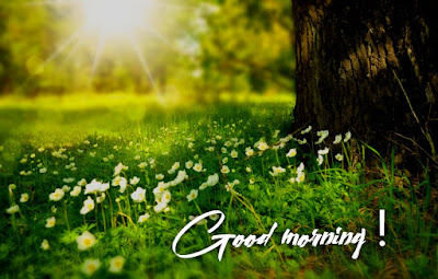 10+ best good morning images new latest