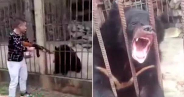 В Мьянме Турист «Из Любопытства» Убил Из Автомата Редкого Медведя