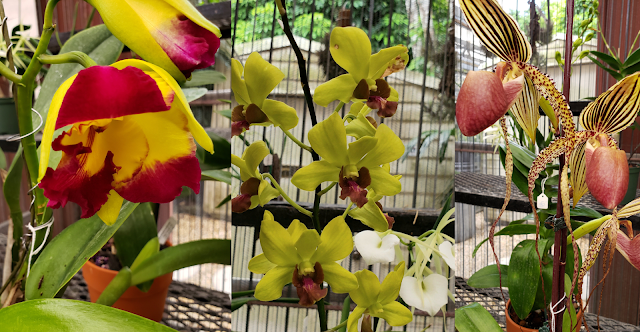 orchids Homestead