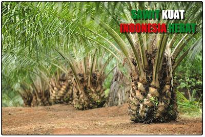 Sawit Kuat Indonesia Hebat, Bicara Sawit, Sawit Baik