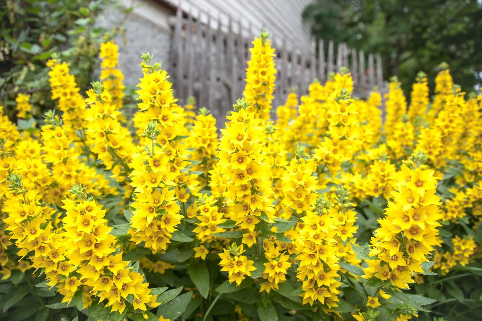 kukkia teisko tampere