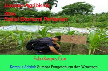 Jurusan Agribisnissosial Ekonomi Pertanian Dan Fakta Menarik Yang