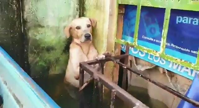 Спасатели не бросили пса во время наводнения, заметив его полные обречённости глаза — видео