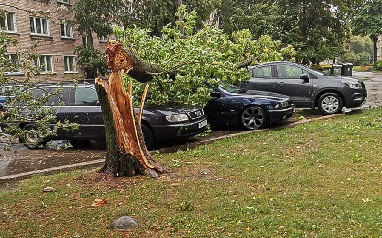 Vakar Daugavpilī vējš gāza kokus uz mašīnām.