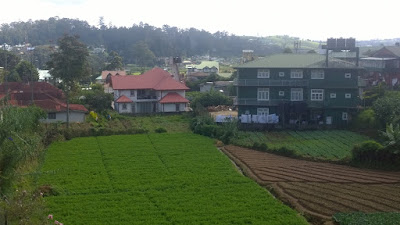 carrot farm in nuwara eliya sri lanka bio agriculture healthy food
