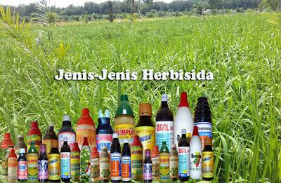 Pengertian Herbisida dan Jenis-Jenisnya