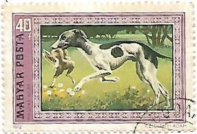Selo Hungarian Greyhound