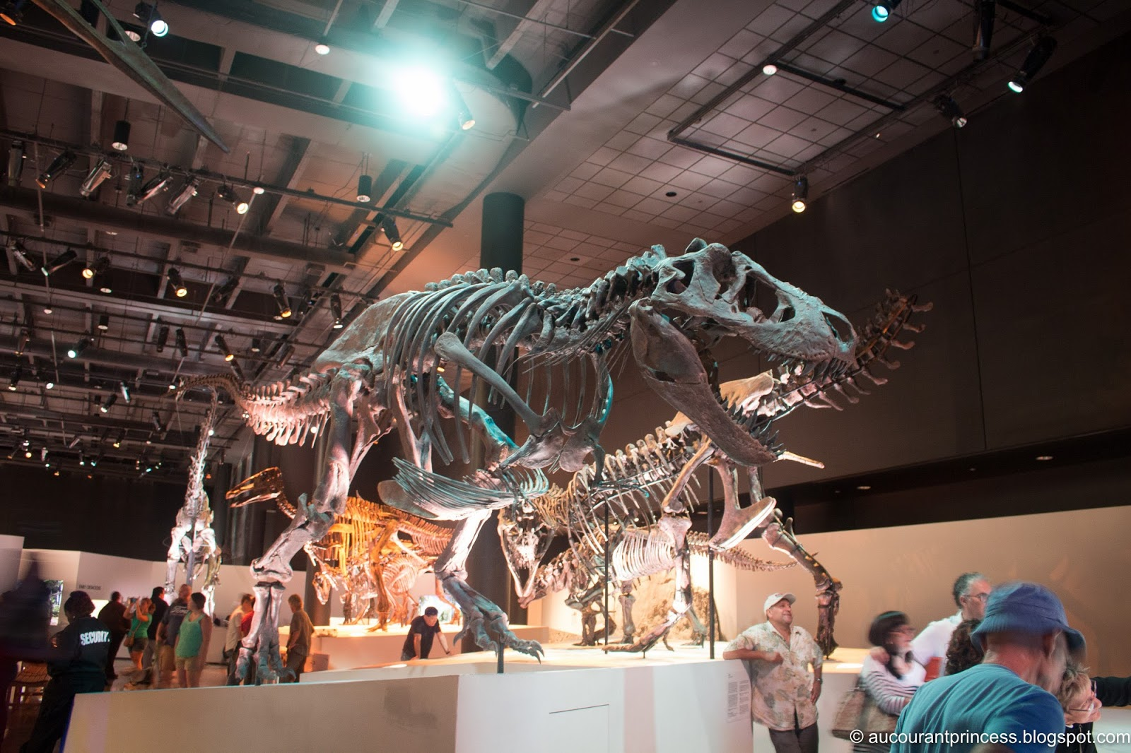 Houston Museum of Natural Science: Things To Do in Houston, Texas, USA