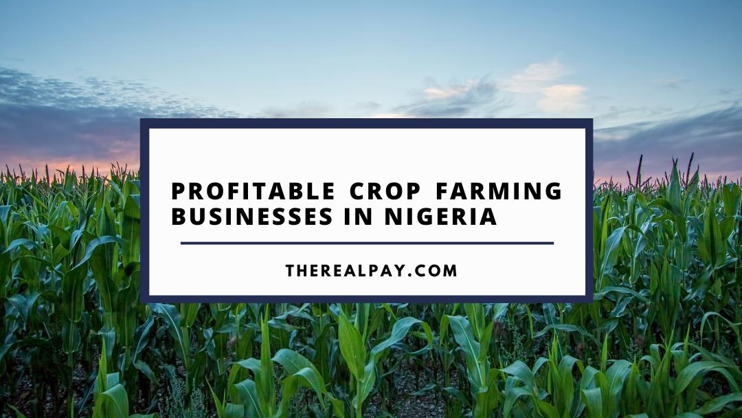 profitable crop farming business in nigeria