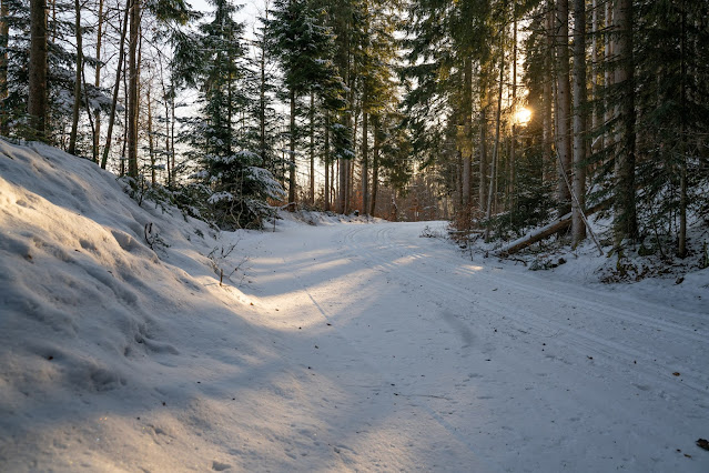 Rundweg Kreuzotter | Hochmoor Filzwald / Kloster Filz | Nationalpark Bayerischer Wald 19