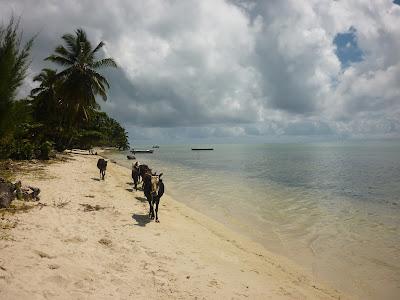 Plage de coco-légumes Sainte-Marie Madagascar