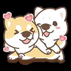 Shiba Inu Love