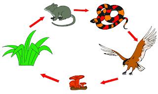 materi soal tematik kelas 5 tema 5