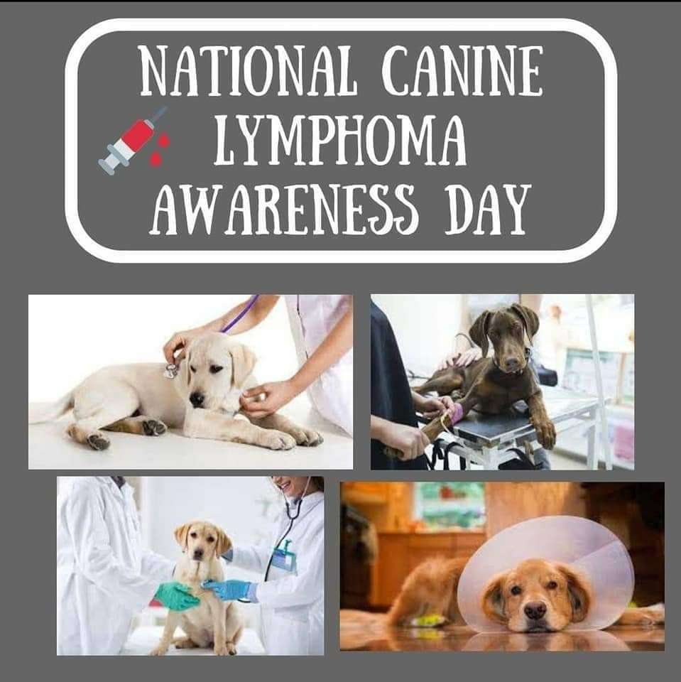 National Canine Lymphoma Awareness Day Wishes Images