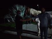 Confira como foi a negociação de um cavalo avaliado em mais de 120 mil reais em Lago da Pedra