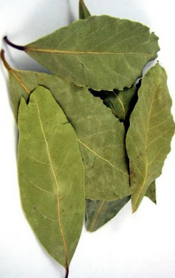 laurel leaf
