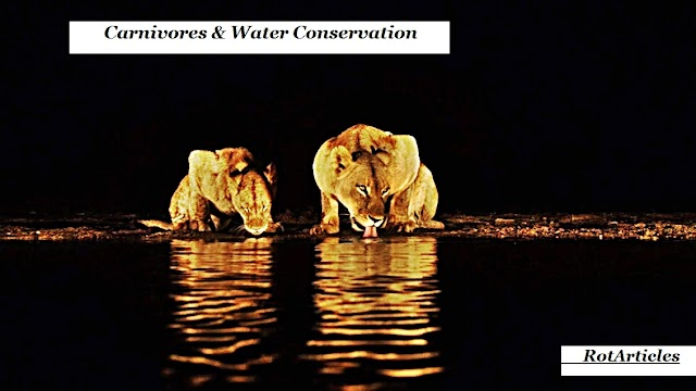 Carnivores & Water Conservation