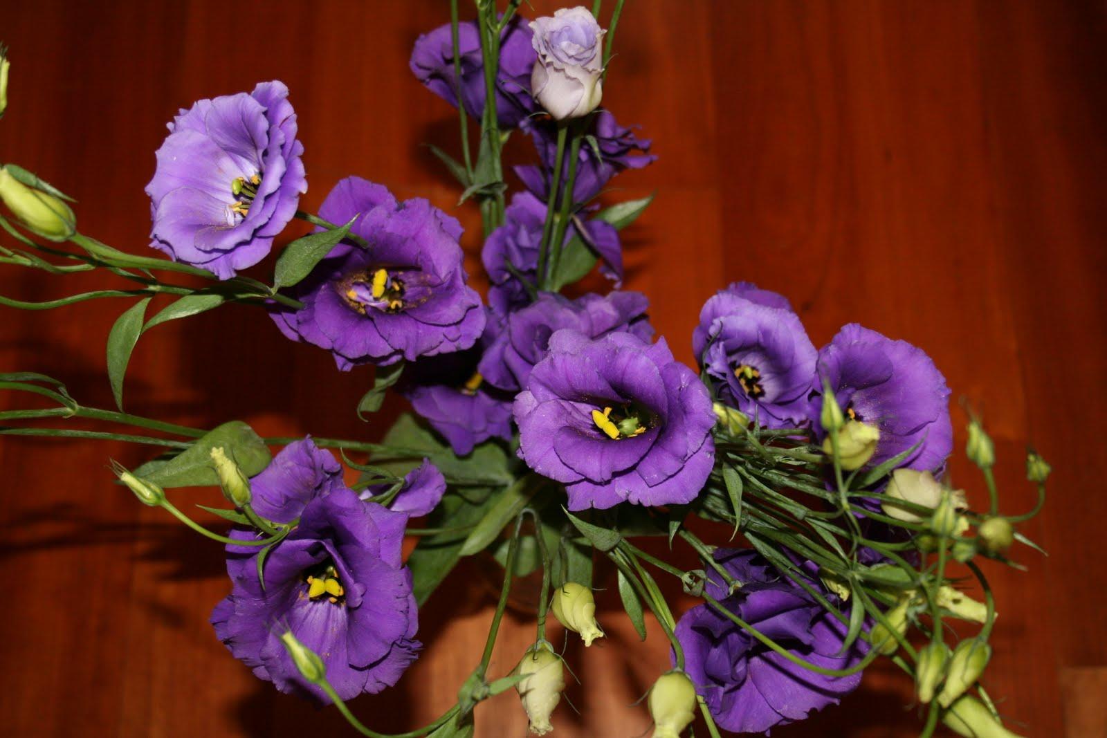 Descargar Fotos De Flores Preciosas