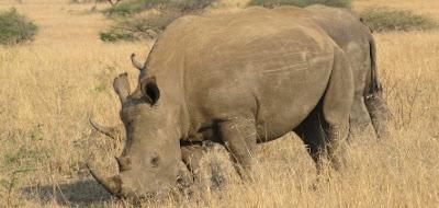 South Africa Safari Holidaus