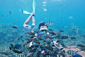 Pulau Menjangan, 10 Best Snorkling Spot in The World